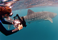 Nicole filming Whale Sharks, Exmouth, Western Australia